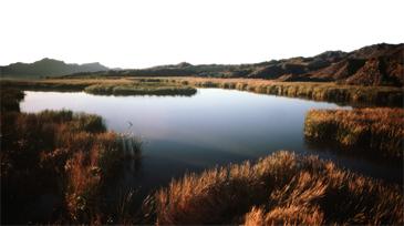 colorado-river-featured