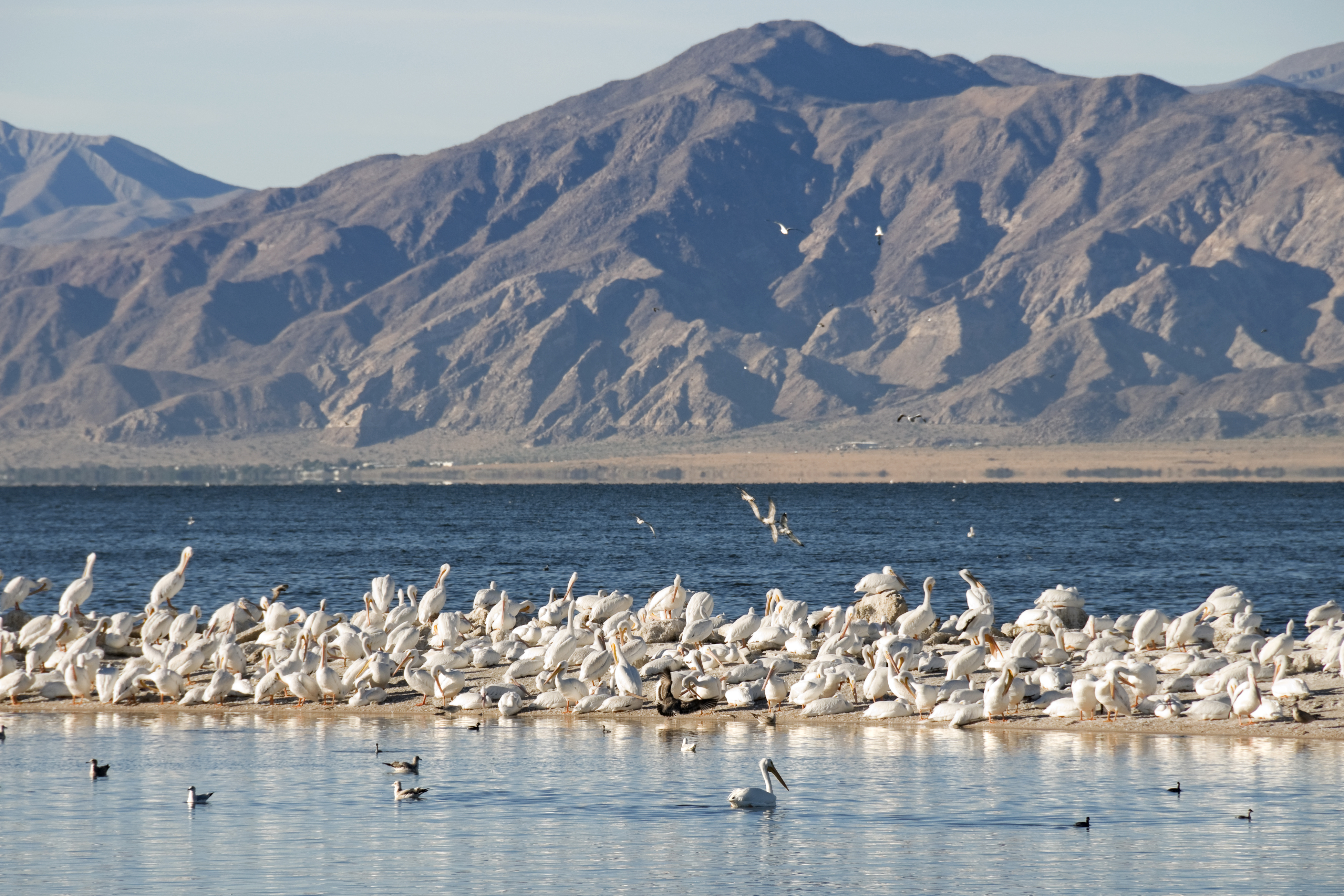 Salton Sea (iStock, photo copyright Phil Augustavo)