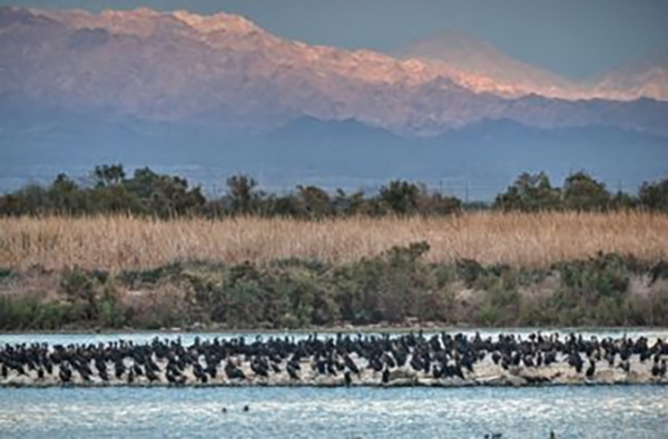 Birds resting on the Salton Sea