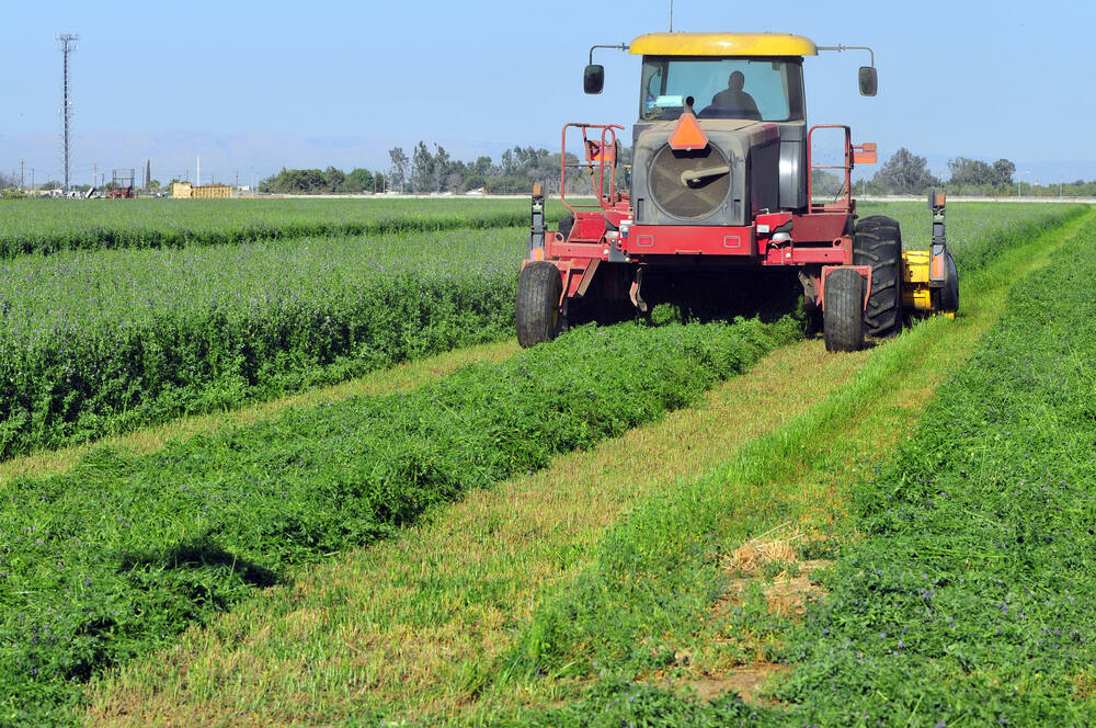 Tractor mowing a green crop