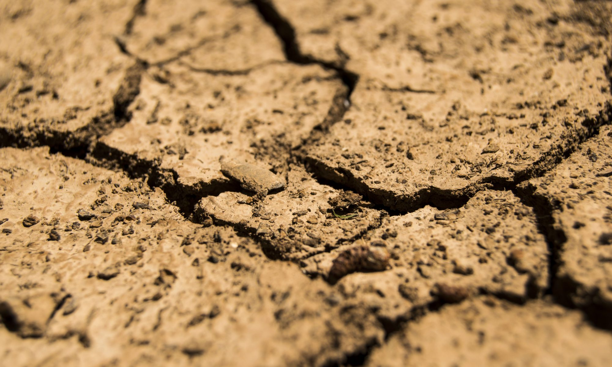 Close-up of cracked earth due to drought conditions