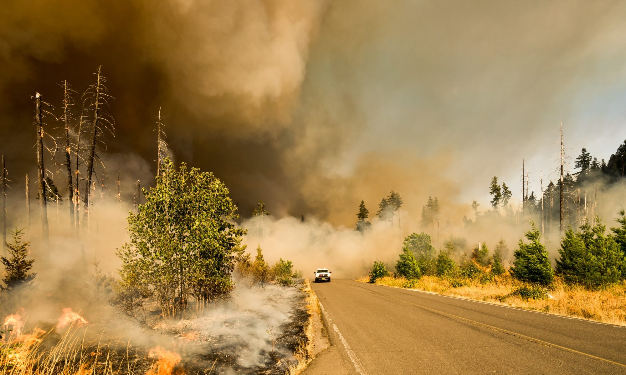 Wildfire smoke billowing over a road